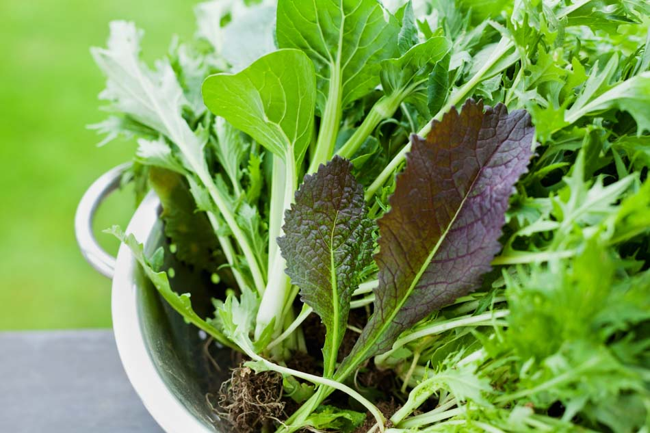 The Benefits of Green Food