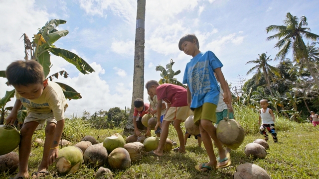 Superfood Chain coconut growers
