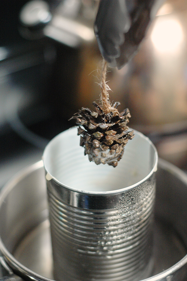 Conifer Cone Fire Starters EcoParent magazine