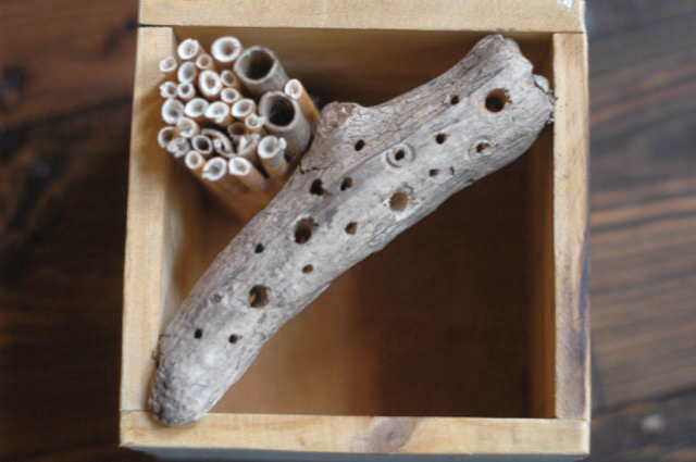 Drill tiny holes in wood for solitary bees to nest in
