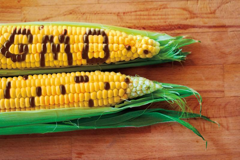 cobs of corn with GMO spelled out in kernels on one
