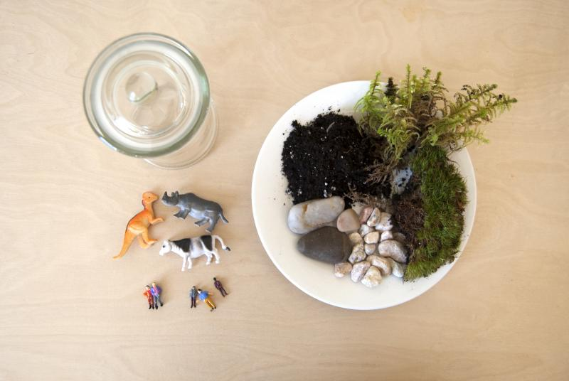 Materials for a mini terrarium