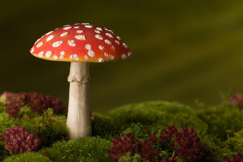 mushroom with red top growing in moss