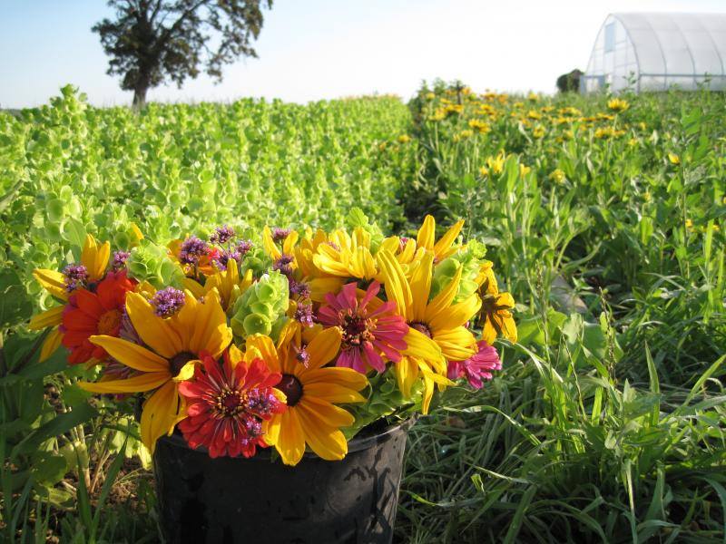 colourful bouquet in the foreground with crops in the background