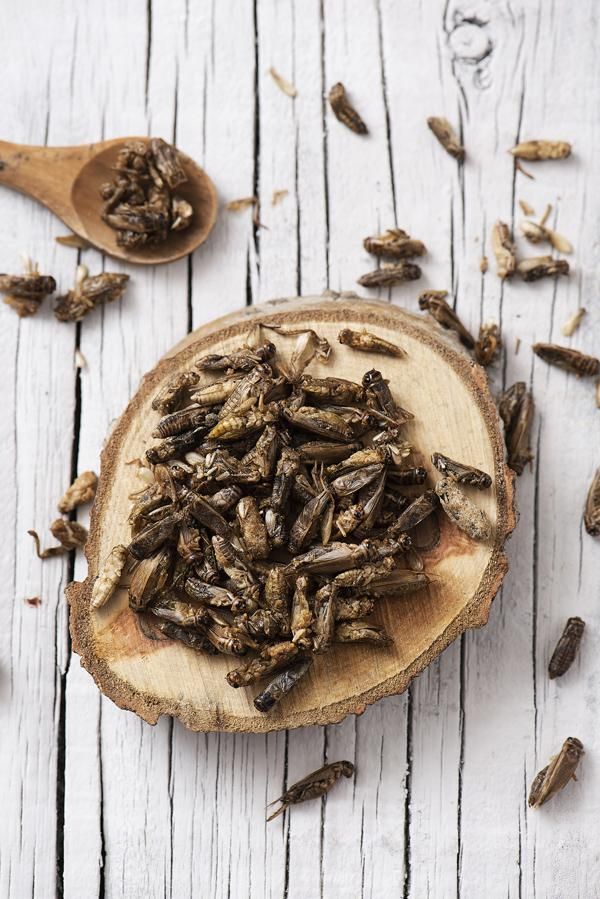 crickets on a tree slice, wooden spoon with crickets, whitewashed wooden background