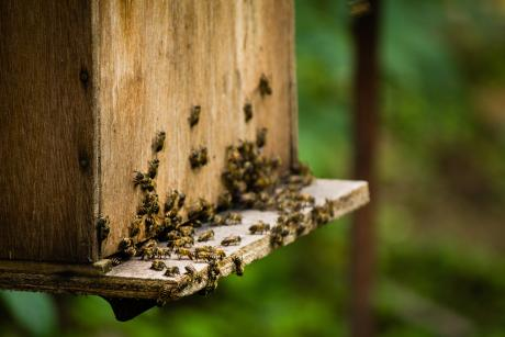 bees crawling around a manufactured wooden hive