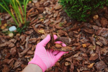 hand wearing pink glove holding mulch from garden