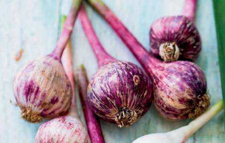 bunch of purple garlic on a white background